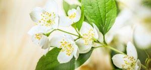 witte bloemen hoveniersbedrijf