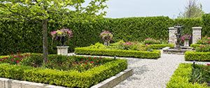 ontwerpen tuin